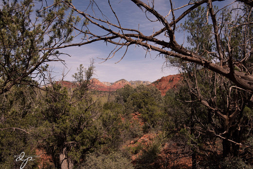 From the Cathedral Rock trails